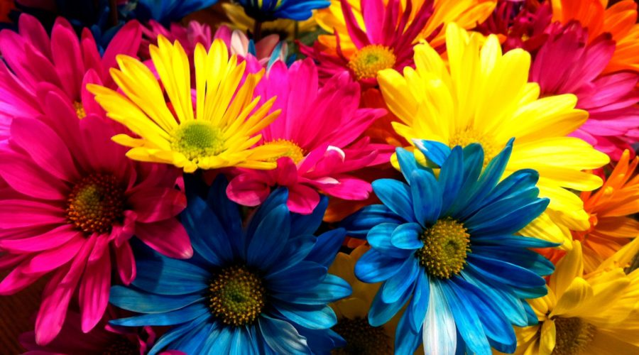How To Say What You Mean In The Language Of Flowers