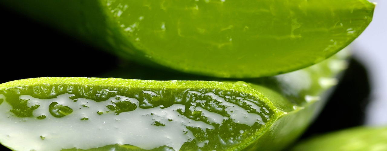 5 Amazing Uses for Aloe Vera